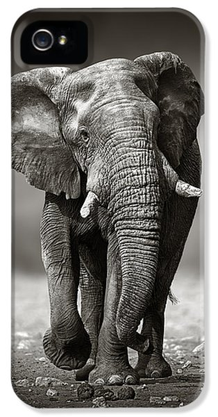 Animals iPhone 5 Case - Elephant Approach From The Front by Johan Swanepoel