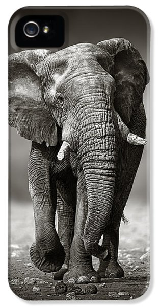 Elephant Approach From The Front IPhone 5 Case by Johan Swanepoel
