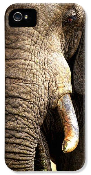Elephant Close-up Portrait IPhone 5 Case by Johan Swanepoel