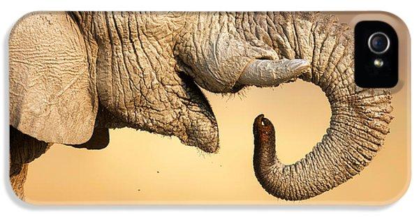 Elephant Drinking IPhone 5 Case