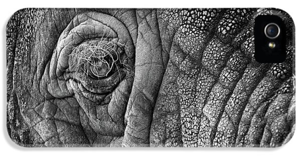 Elephant Eye IPhone 5 / 5s Case by Sebastian Musial