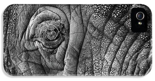 Elephant Eye IPhone 5 Case by Sebastian Musial