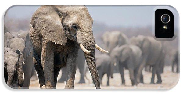 Elephant Feet IPhone 5 Case by Johan Swanepoel