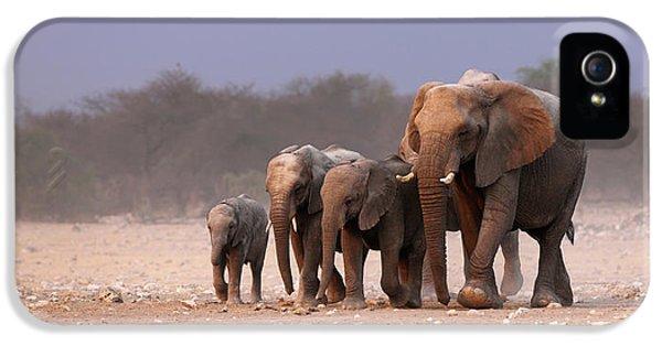 Elephant Herd IPhone 5 Case by Johan Swanepoel