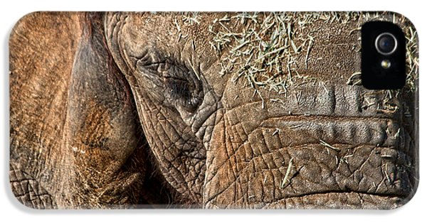 Elephant Never Forgets IPhone 5 Case by Miroslava Jurcik