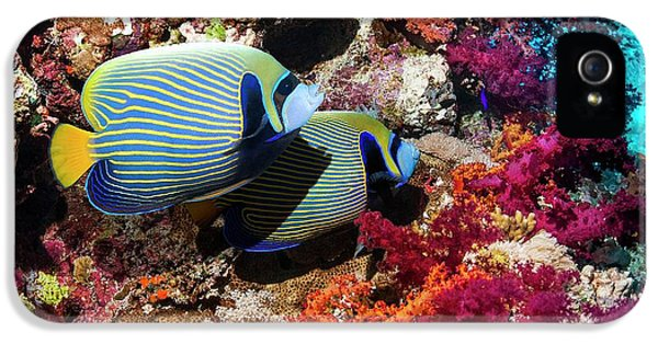 Emperor Angelfish On A Reef IPhone 5 Case by Georgette Douwma