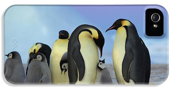 Emperor Penguin Parents And Chick IPhone 5 Case