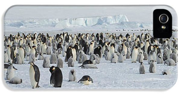 Emperor Penguins Aptenodytes Forsteri IPhone 5 Case by Panoramic Images