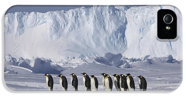 Emperor Penguins Walking Antarctica IPhone 5 Case