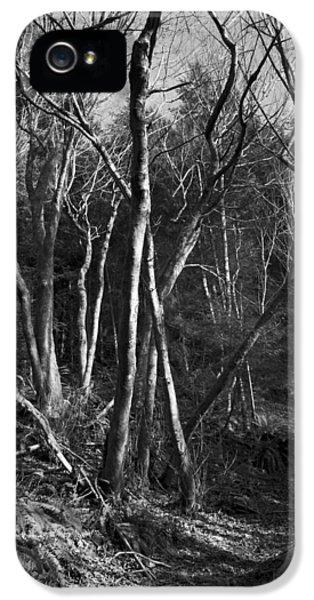 Enchanted Forest IPhone 5 Case by Yulia Kazansky