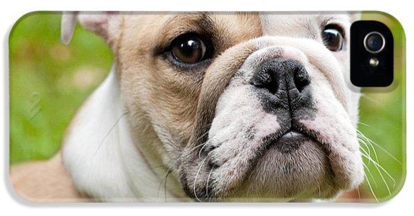 Dog iPhone 5 Case - English Bulldog Puppy by Natalie Kinnear