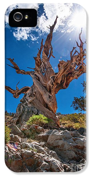 Eternity - Dramatic View Of The Ancient Bristlecone Pine Tree With Sun Burst. IPhone 5 Case