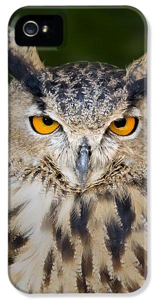 Eurasian Eagle Owl IPhone 5 Case by Susan Candelario