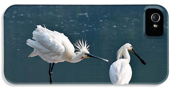 Eurasian Spoonbill Courtship Display IPhone 5 Case