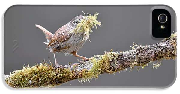 Wren iPhone 5 Case - Eurasian Wren Collecting Nesting Material by Dr P. Marazzi