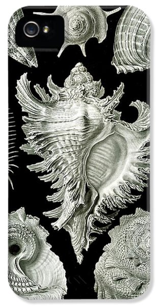 Assorted Sea Shells IPhone 5 Case by Ernst Haeckel