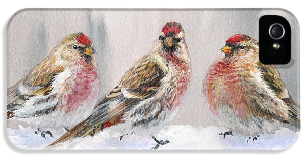 Crossbill iPhone 5 Case - Snowy Birds - Eyeing The Feeder 2 Alaskan Redpolls In Winter Scene by Karen Whitworth