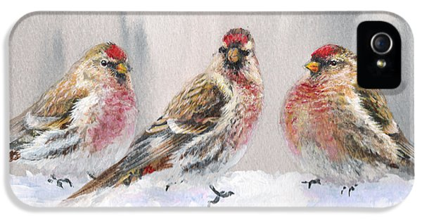 Snowy Birds - Eyeing The Feeder 2 Alaskan Redpolls In Winter Scene IPhone 5 Case by Karen Whitworth