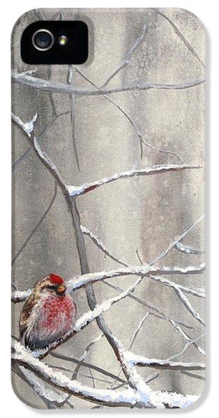 Crossbill iPhone 5 Case - Eyeing The Feeder Alaskan Redpoll In Winter by Karen Whitworth