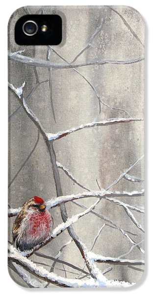 Eyeing The Feeder Alaskan Redpoll In Winter IPhone 5 Case by Karen Whitworth