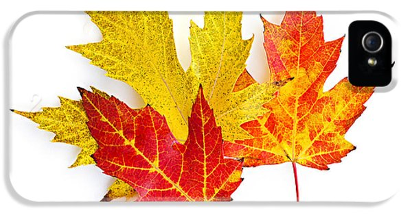 Fall Maple Leaves On White IPhone 5 Case by Elena Elisseeva