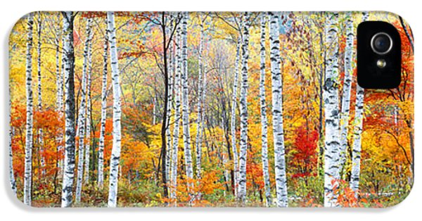 Fall Trees, Shinhodaka, Gifu, Japan IPhone 5 Case by Panoramic Images