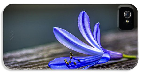 Lily iPhone 5 Case - Fallen Beauty by Marvin Spates