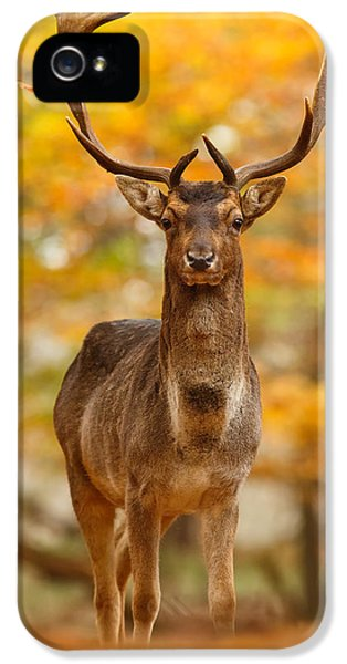 Fallow Deer In Autumn Forest IPhone 5 Case by Roeselien Raimond