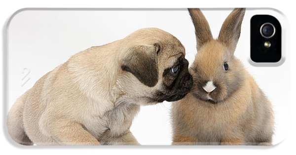 Fawn Pug Pup With Young Rabbit IPhone 5 Case