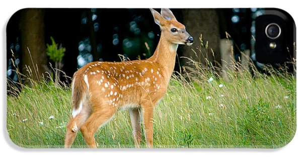 Fawn IPhone 5 Case by Shane Holsclaw