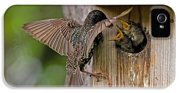 Feeding Starlings IPhone 5 Case by Torbjorn Swenelius