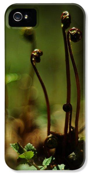 Fern Emergent IPhone 5 Case by Rebecca Sherman