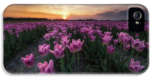 Tulip iPhone 5 Case - Field Of Tulips by Amada Terradillos S.