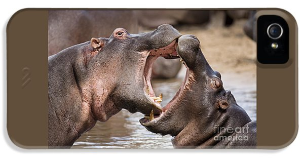 Fighting Hippos IPhone 5 Case by Richard Garvey-Williams