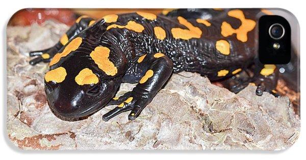 Fire Salamander (salamandra Salamandra) IPhone 5 Case by Photostock-israel