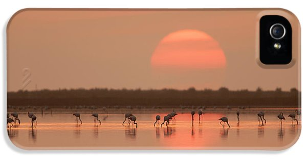 Flamingos At Sunrise IPhone 5 Case