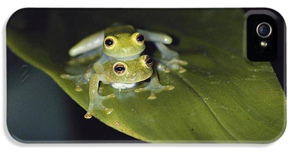 Sex frog mobile