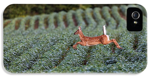 Flight Of The White-tailed Deer IPhone 5 / 5s Case by Everet Regal