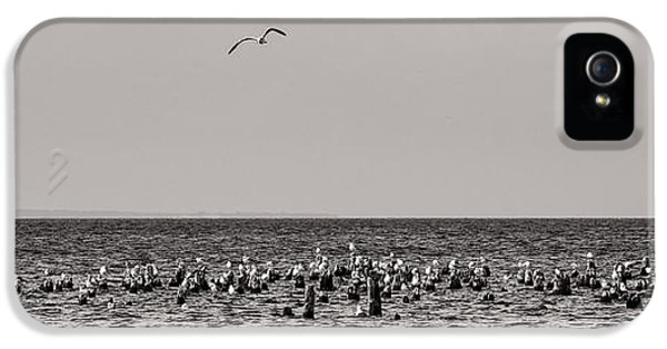 Flock Of Seagulls In Black And White IPhone 5 Case by Sebastian Musial
