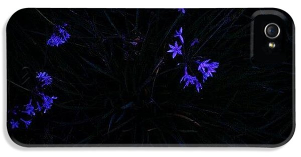 Blue iPhone 5 Case - Flowers Like Stars by CML Brown