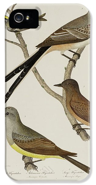 Wren iPhone 5 Case - Flycatcher And Wren by British Library