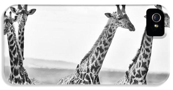 Four Giraffes IPhone 5 / 5s Case by Adam Romanowicz