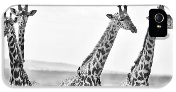 Four Giraffes IPhone 5 Case