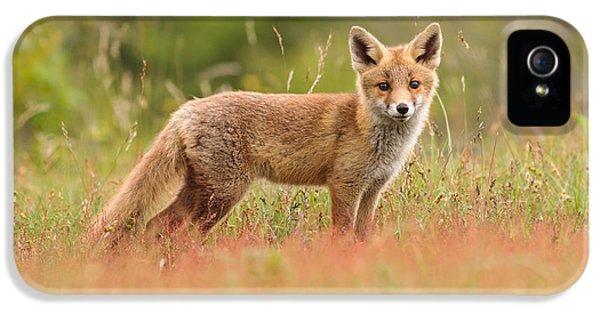 Fox Kit In A Field Of Sorrel IPhone 5 Case by Roeselien Raimond