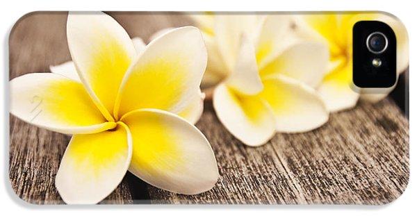 Plumeria Flower iPhone 5 Case - Frangipani Flower by Delphimages Photo Creations