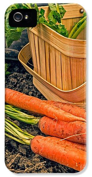 Carrot iPhone 5 Case - Fresh Garden Vegetables by Edward Fielding