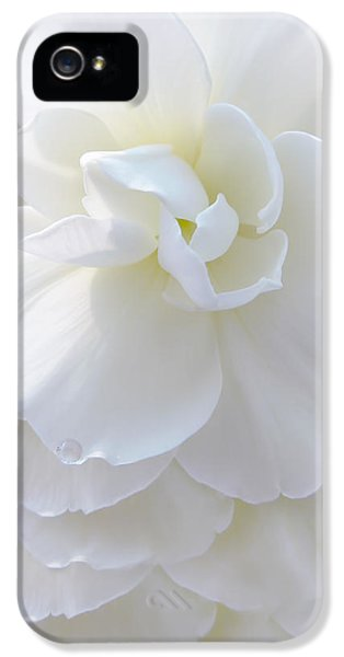 Frilly Ivory Begonia Flower IPhone 5 Case by Jennie Marie Schell