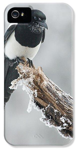 Frosted Magpie IPhone 5 Case by Tim Grams