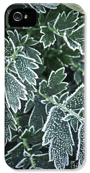 Frosty Leaves In Late Fall IPhone 5 Case by Elena Elisseeva