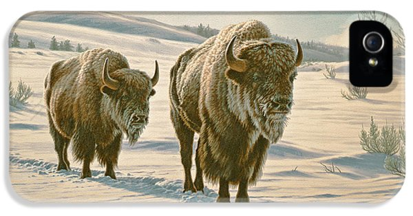 Frosty Morning - Buffalo IPhone 5 Case by Paul Krapf